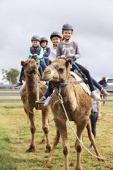 Little Humpty Camel Rides (Children's Day Ticket Required)