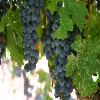 San Francisco, Monterey, & Wine Country