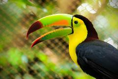 Costa Rica - Discover Natural Paradise!