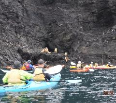 Rapid Bay Sea Kayaking Tour
