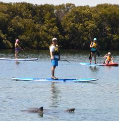 Dolphin Sanctuary SUP Hire