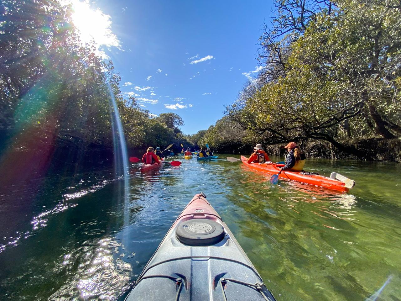 Dolphin Sanctuary & Ships Graveyard Kayak Tour Gift Voucher