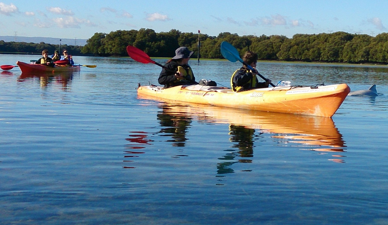 Dolphin Sanctuary & Ships Graveyard 2/3 person kayak hire