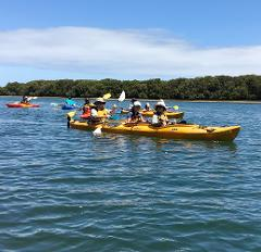 Dolphin Sanctuary Family Tour