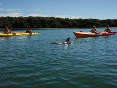 Gift Voucher- Dolphin Sanctuary & Ships Graveyard Kayak Hire(1 person kayak)