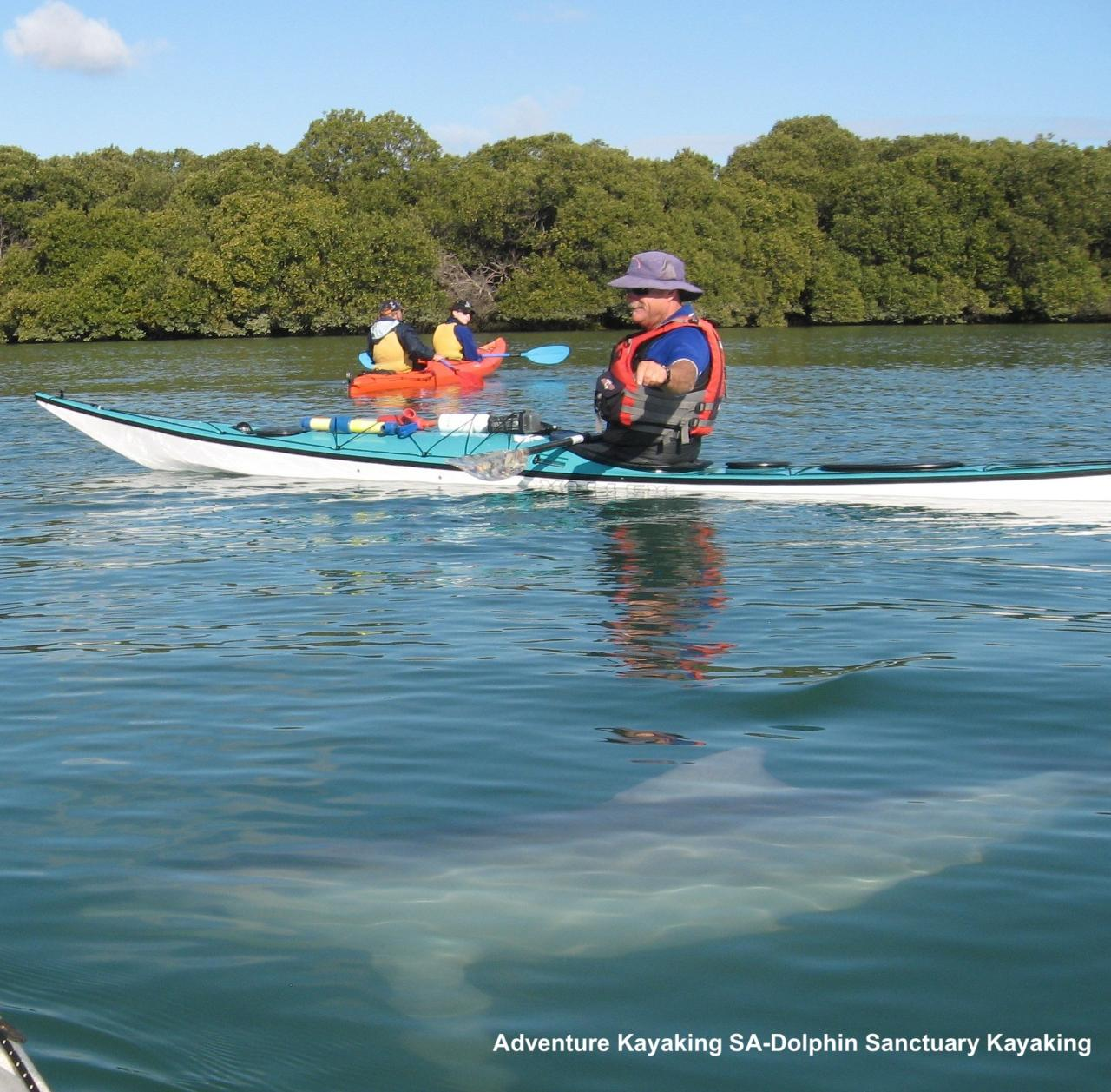 Gift Voucher-Dolphin Sanctuary and Ships Graveyard Kayak Tour for two people