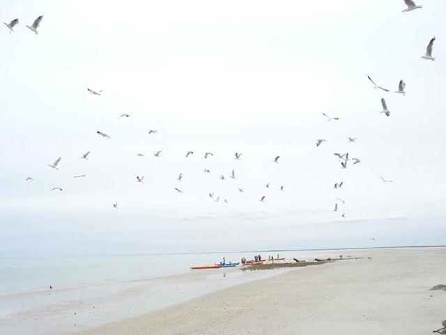 Bird Island Sea Kayak