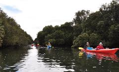 Mangrove Creeks of the Barker Inlet Kayak Tour