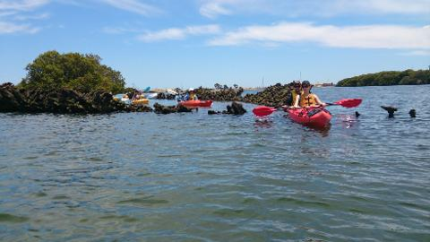 Dolphin Sanctuary & Ships Graveyard Kayak Hire-1-person