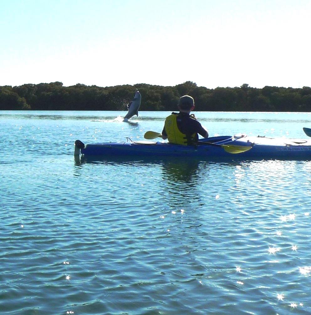 Dolphin Sanctuary & Ships Graveyard Kayak Tour