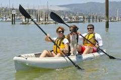 Dolphin Sanctuary & Ships Graveyard 2/3person sit-on kayak hire