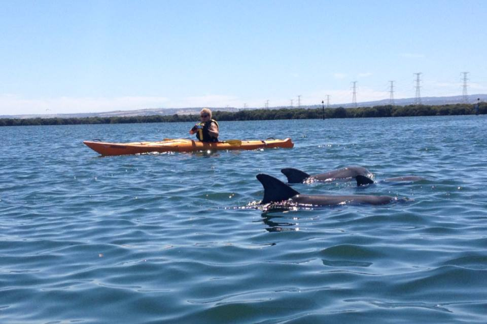 Image result for adelaide dolphin sanctuary