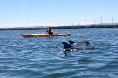 Dolphin Sanctuary & Ships Graveyard Self Guided Tour-1-person kayak