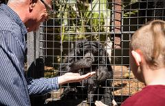 Meet the Primates and a Day at Adelaide Zoo