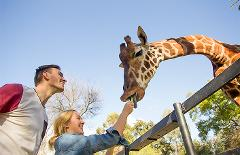 A day at Adelaide Zoo and a Giraffe Feed