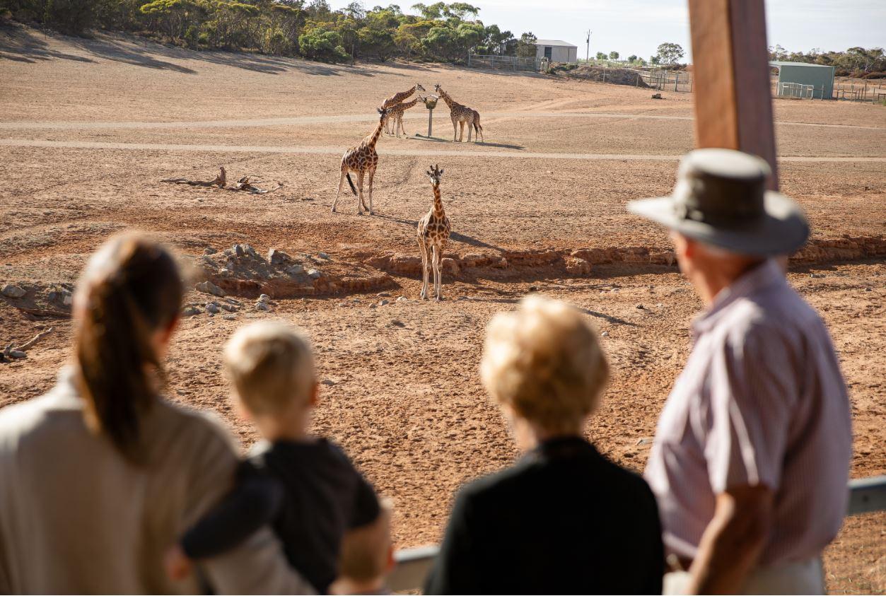 Monarto Safari Park General Admission
