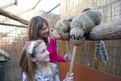 A day at Adelaide Zoo and a Coati Encounter