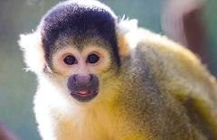 A day at Adelaide Zoo and Squirrel Monkey Encounter