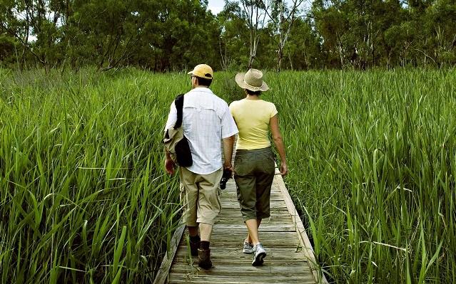 Wetlands Boardwalk Experience
