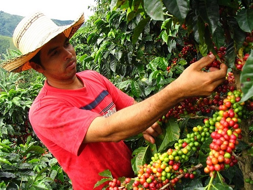 Colombian Coffee Tour