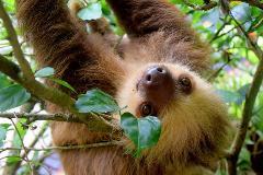 Costa Rica – Wildlife Safari