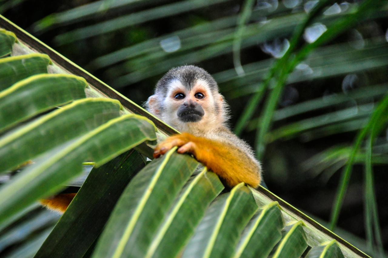Costa Rica – Family Volunteer Adventure