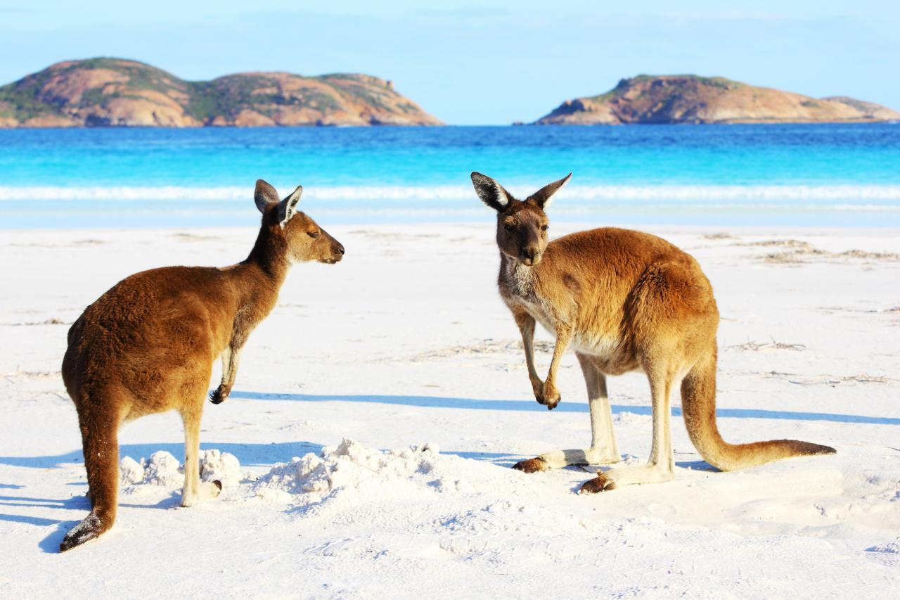 Australia – Beachside Wildlife Adventure