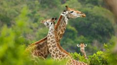 South Africa – Wildlife Conservation Experience