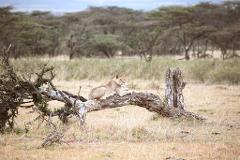Kenya – Safari & Conservation