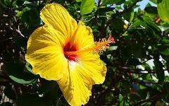Hawaii - Ocean & Islands Adventure