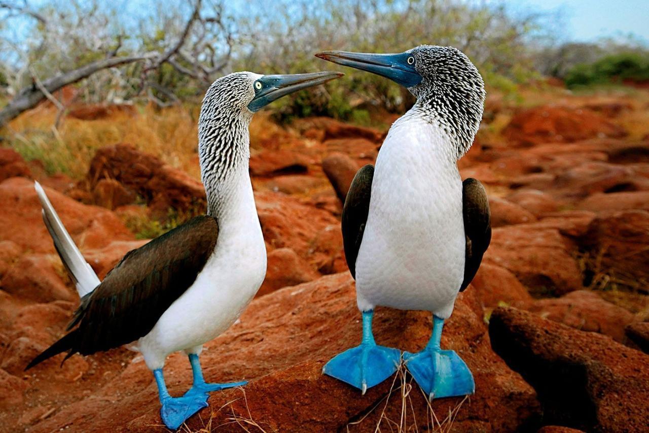 Galapagos - Wildlife Odyssey
