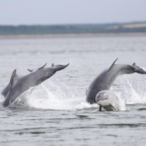 Croatia – Dolphins & Islands Expedition