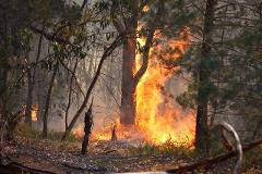 Flames, fuel and forests incursion