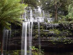 Mt Field National Park and Styx River Valley Tour