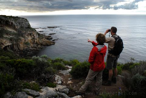 Cape to Cape Guided 'End to End' 8 Day Ultimate Experience
