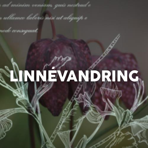 Stadsvandring - I Linnés fotspår