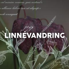 Linnévandring guidad tur i Uppsala