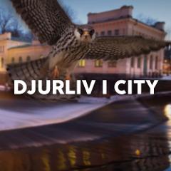 Stadsvandring - Djurliv i city