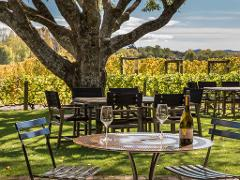 West Auckland's Vineyards Half Day Tour