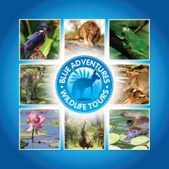 Private Blue Adventures tour