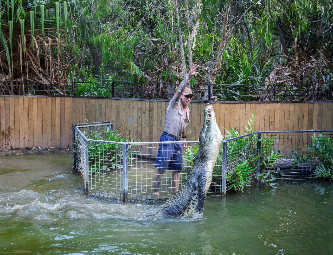 Hartley's Crocodile Adventures (Half Day) from Port Douglas