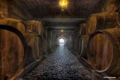 History with Wines -Cruises-