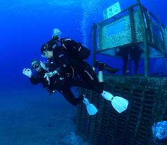 Tasting under sea from North -Private-
