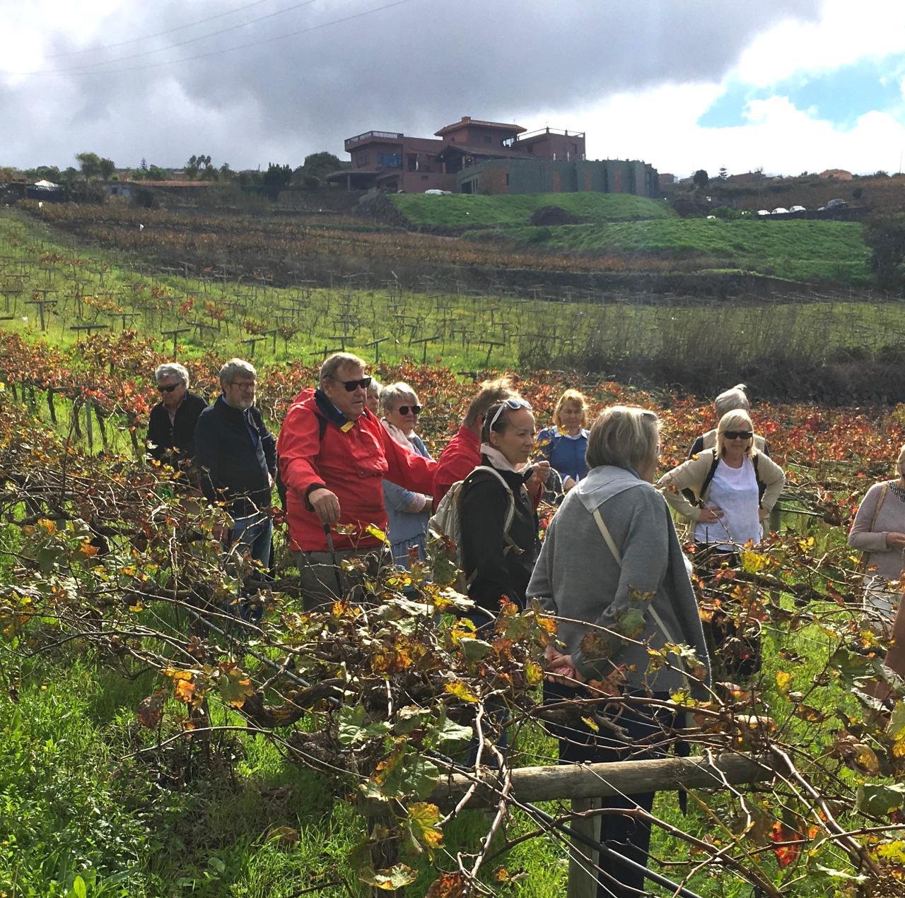 Visita Viñedos y Bodega + Cata 4x4