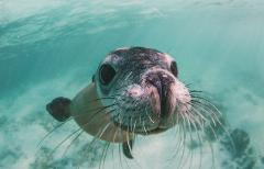 Sea Lion Snorkel Tour, 2hrs