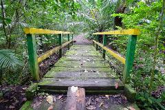 Gatun and Parque Nacional Soberania hike (half day)