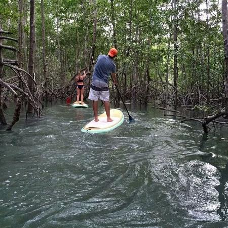 Paddle Board Damas Island Mangroves