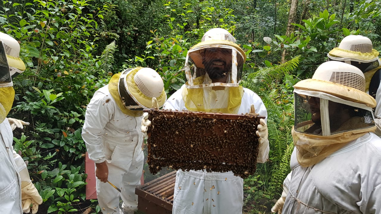 Bee Farm Tour