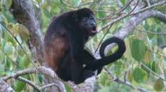 Curu Wildlife Reserve