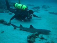Tortuga Island Cruise & Diving
